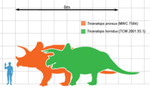 Size Of Triceratops Prorsus Orange And T Horridus Green Compared To A Human