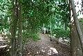 Tunbridge Wells Circular Path - Beech Wood - geograph.org.uk - 1493308.jpg