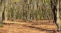 Tussen Elspeet en Apeldoorn, bomen op de Veluwe IMG 4694 2020-04-16 15.32.jpg