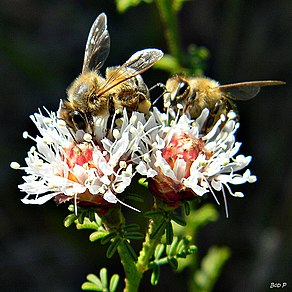 Two Bee or Not Two Bee (6332939872).jpg
