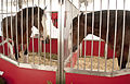 Two of the Budweiser Clydesdales - The Big E, 2014-09-24.jpg