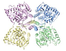 Tirozino-hidroksilase montrante ĉiun kvar subunits.png