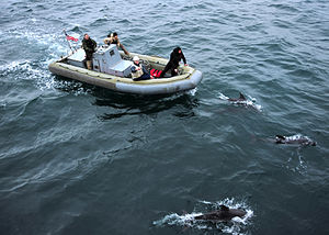 US Navy 120118-N-NL401-126 Dolphins swim in front of a rigid-hull inflatable boat as Sailors assigned to the Arleigh Burke-class guided-missile des.jpg