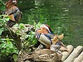 Uccelli variopinti e sgargianti.JPG