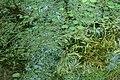 Unidentified plants in India 00545.jpg