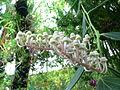 Unidentified rainforest plant.jpg