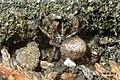 Unknown spider (FG) (22435482514).jpg