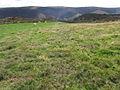 Upland pasture - geograph.org.uk - 1498494.jpg