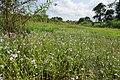 Urathur latrate fields in Monsoon season 2014 (1).jpg