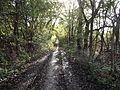 Urmston Meadows - Tree Line - panoramio.jpg