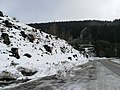 Vítkovice (okres Semily), pařezy.jpg