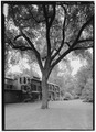VIEW OF THE OLMSTED ELM WITH THE HOUSE IN THE BACKGROUND. - Fairsted, 99 Warren Street, Brookline, Norfolk County, MA HABS MASS,11-BROK,6-37.tif
