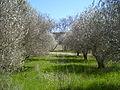 Val Joannis garden 9.JPG