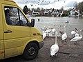 Van driver vs. swans (12505014814).jpg