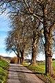 Velden Köstenberg herbstliche Birnbaum-Allee 02112008 66.jpg