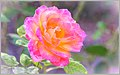 Vibrant Autumn Rose (129727791).jpeg
