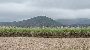 Carmila, Queensland - View across sugar cane fields towards the mountains, Carmila, 2016