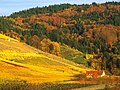Vin - panoramio.jpg