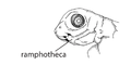 W1. Ramphothecae appear (S01a).png