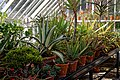 Walled garden greenhouse at Myddelton House, Enfield, London, England 02.jpg