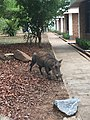 Warthog outside Guest Lodge.jpg