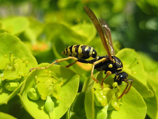 Wasp 080427
