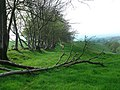 Wessex Ridgeway from Pilsdon Penn. - geograph.org.uk - 415363.jpg