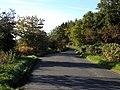 West Hill Edge Plantation - geograph.org.uk - 266256.jpg