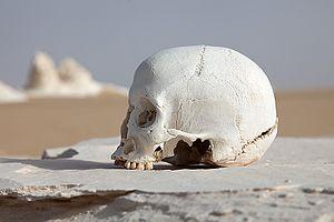WhiteDesertSkull.jpg