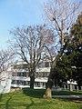 Wiener Naturdenkmal 68 - Baumhasel (Döbling) h.JPG