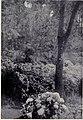 Wild Blue Hydrangea, MON 1909.jpg