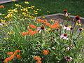 Wildflower P7300013.JPG