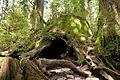 Wilson Stump 05.jpg
