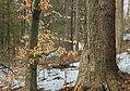 Winter Walk (7) (16836791661).jpg