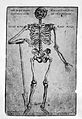 Woodcut; skeleton with right forearm Wellcome L0000814.jpg
