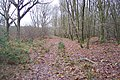 Woodland Track in Goldwell Wood - geograph.org.uk - 1618678.jpg