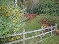Woodland track near Bohespic. - geograph.org.uk - 263295.jpg