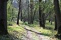 Wytham Great Wood - geograph.org.uk - 1122044.jpg