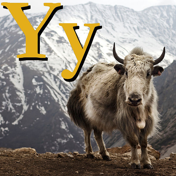 Файл:Y is for Yak.jpg