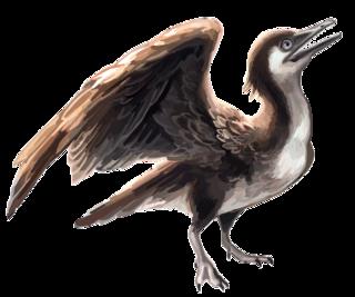 <i>Yanornis</i> Extinct genus of birds