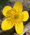 Yellow flower5.jpg