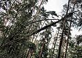 Zhukovskiy, Moscow Oblast, Russia - panoramio (46).jpg