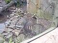 Zoo am Meer 2008 PD 62.JPG