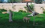 Zoo de Lisboa by Juntas 75.jpg