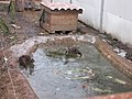 Zoo des 3 vallées - Animaux - 2015-01-02 - i3437.jpg