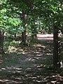 (PL) Polska - Warmia - Las Miejski w Olsztynie - The City Forest in Olsztyn (28.VIII.2012) - panoramio (26).jpg