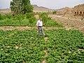 (jowshaghan)جوشقان مركزي كاشان - panoramio (3).jpg