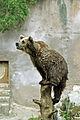 Ähtärin karhut 1.jpg