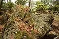 Αισθητικό Δάσος Καισαριανής 10.jpg