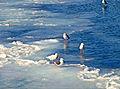 Бегущие по замерзшим волнам.jpg